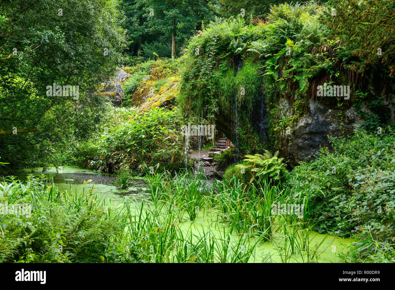 Waterfall and pond at Wishing Steps within the Rock Close at Blarney Castle, near Cork in County Cork, Republic of Ireland - Stock Image