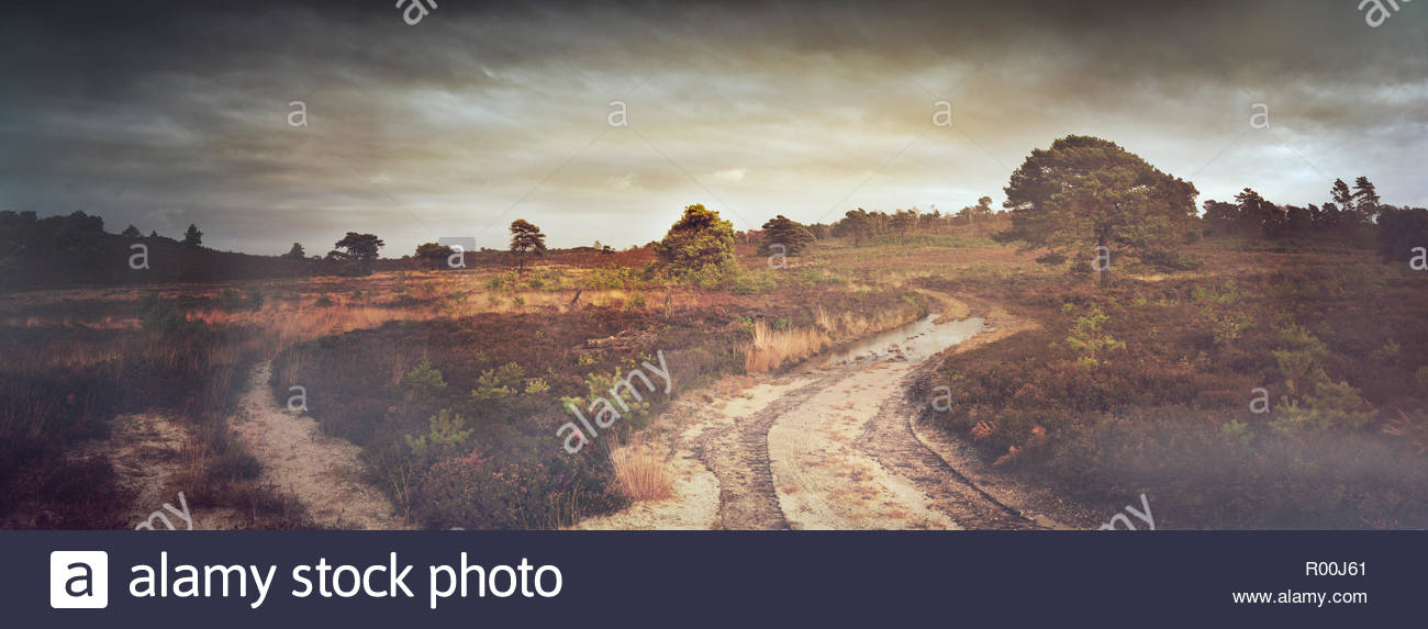 Bush land with dirt road - Stock Image