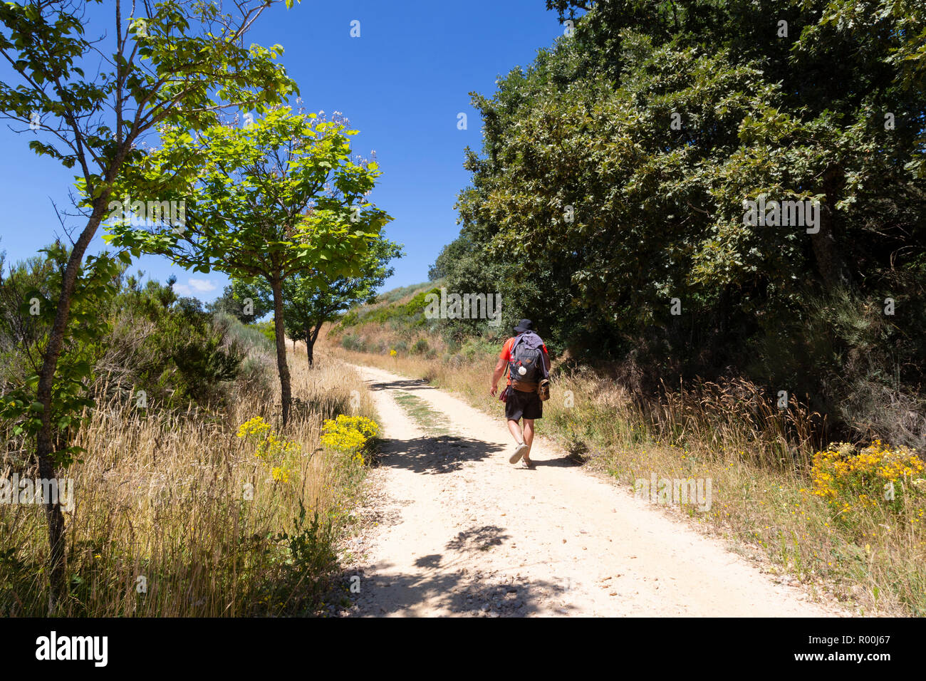 Camino de Santiago (Spain) - A pilgrim walking along the way of St.James Stock Photo