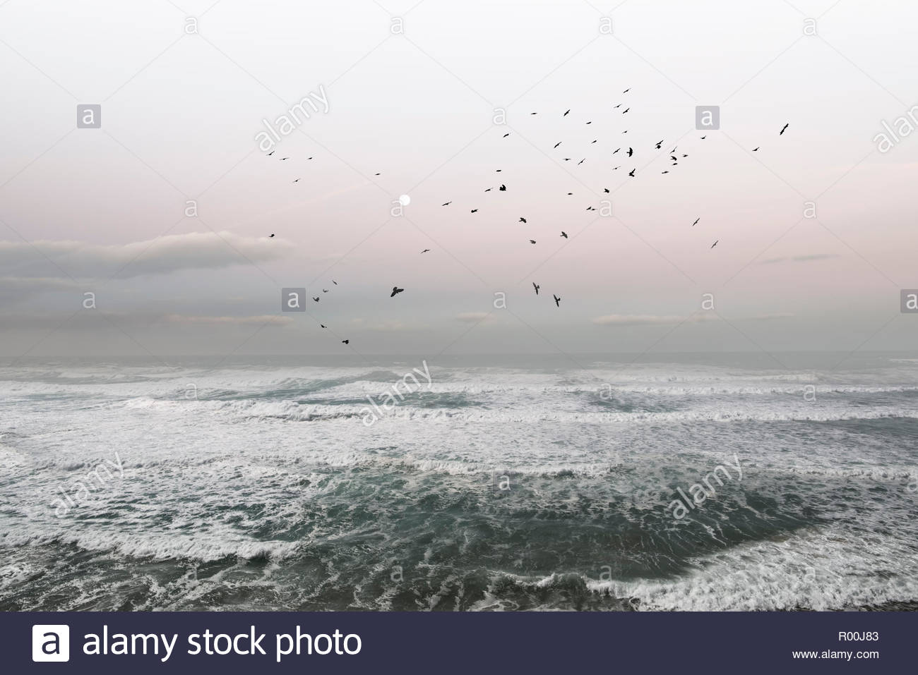 Flock of birds flying over sea in Portugal Stock Photo