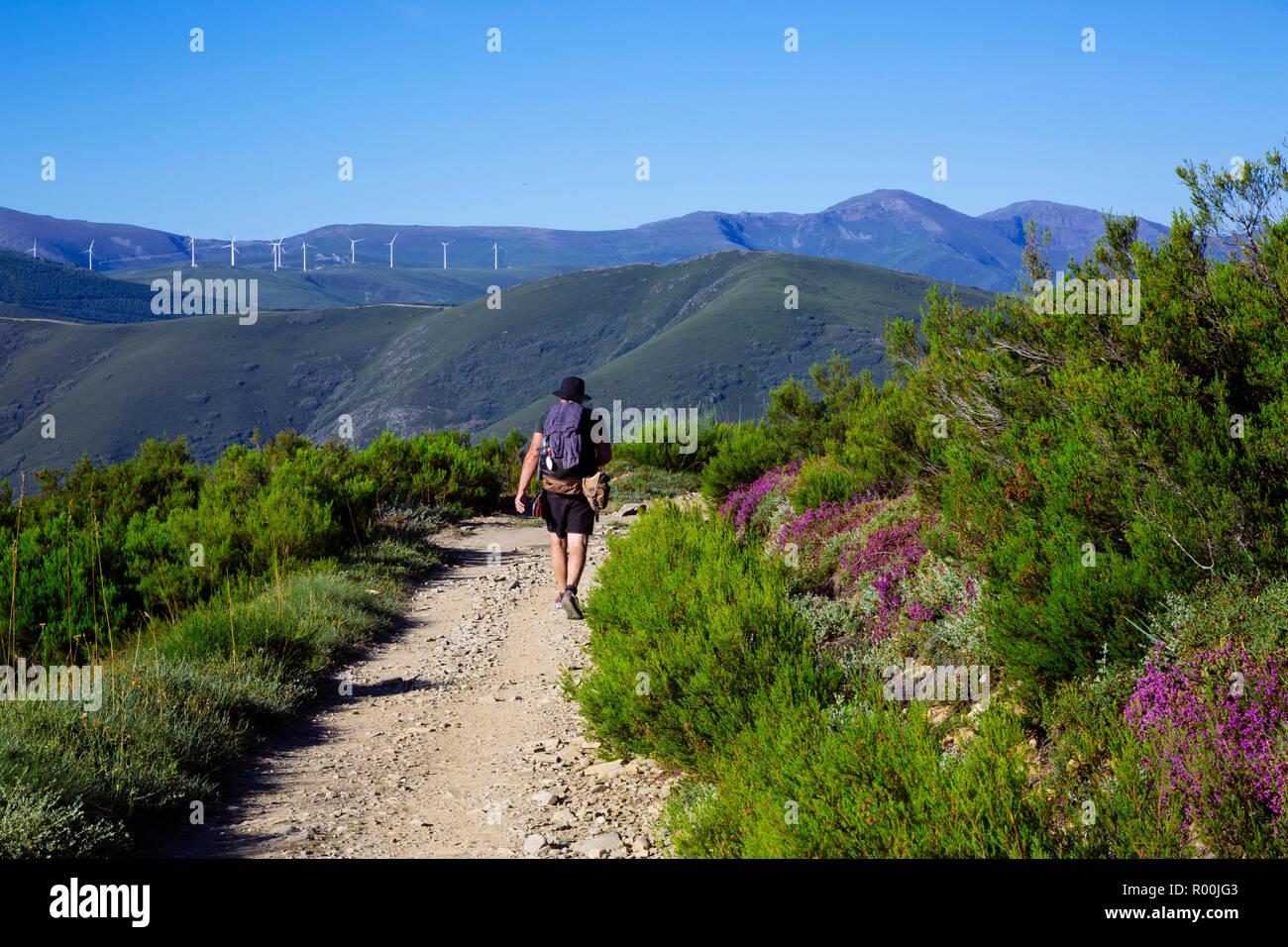Camino de Santiago (Spain) - Pilgrims walking along the way of St.James, in the Bierzo green landscape Stock Photo