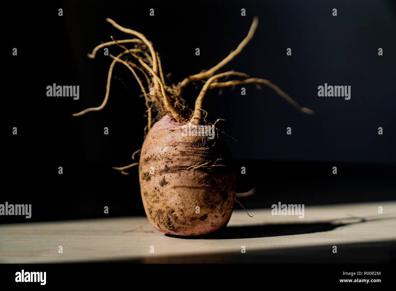 White radish background with roots on the table in light and shade Stock Photo