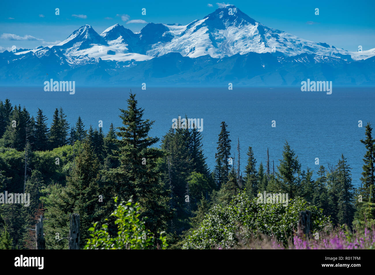 Clear view of Mount Redoubt from Anchor Point Alaska on a sunny day. Fireweed and trees in the foreground - Stock Image