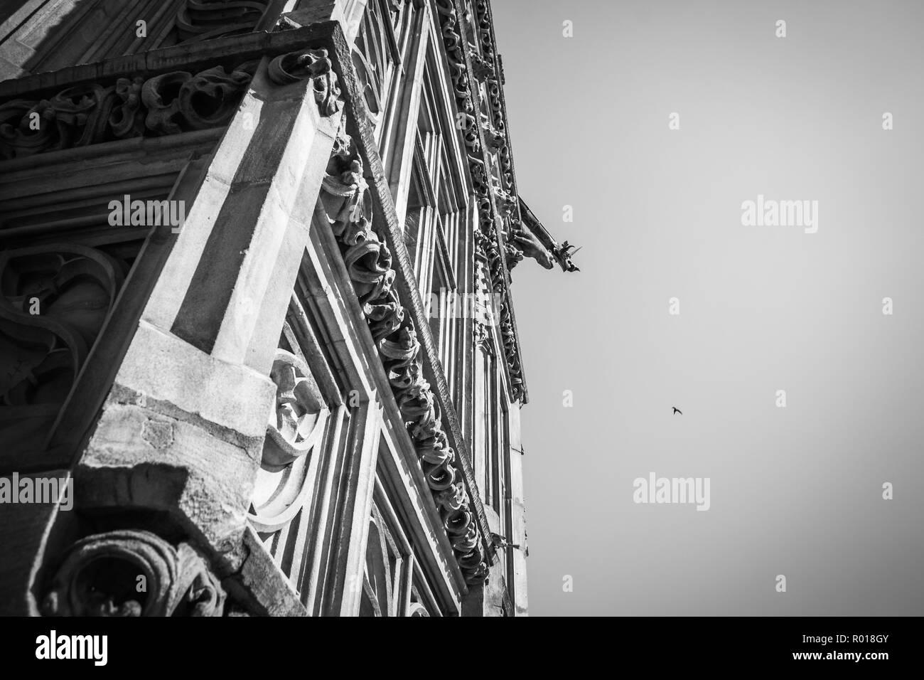 Swallow hunting- artistic interpretation of 1/320s of Wroclaw City Hall history. Stock Photo