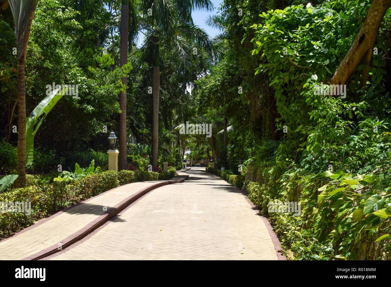 Walk through tropical park - Stock Image