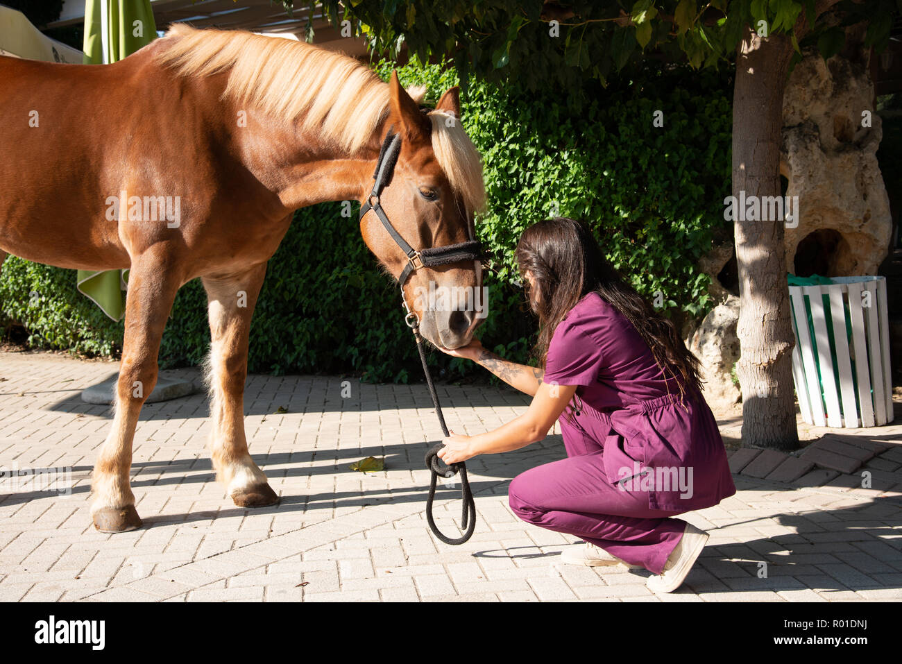 Young female veterinarian doctor attending a brown horse outdoor. Equestrian healthcare medical concept. - Stock Image