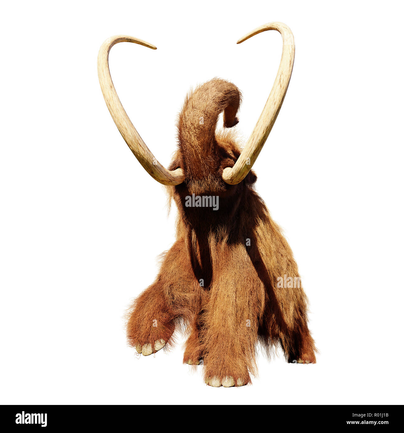 woolly mammoth, running prehistoric mammal isolated on white background - Stock Image