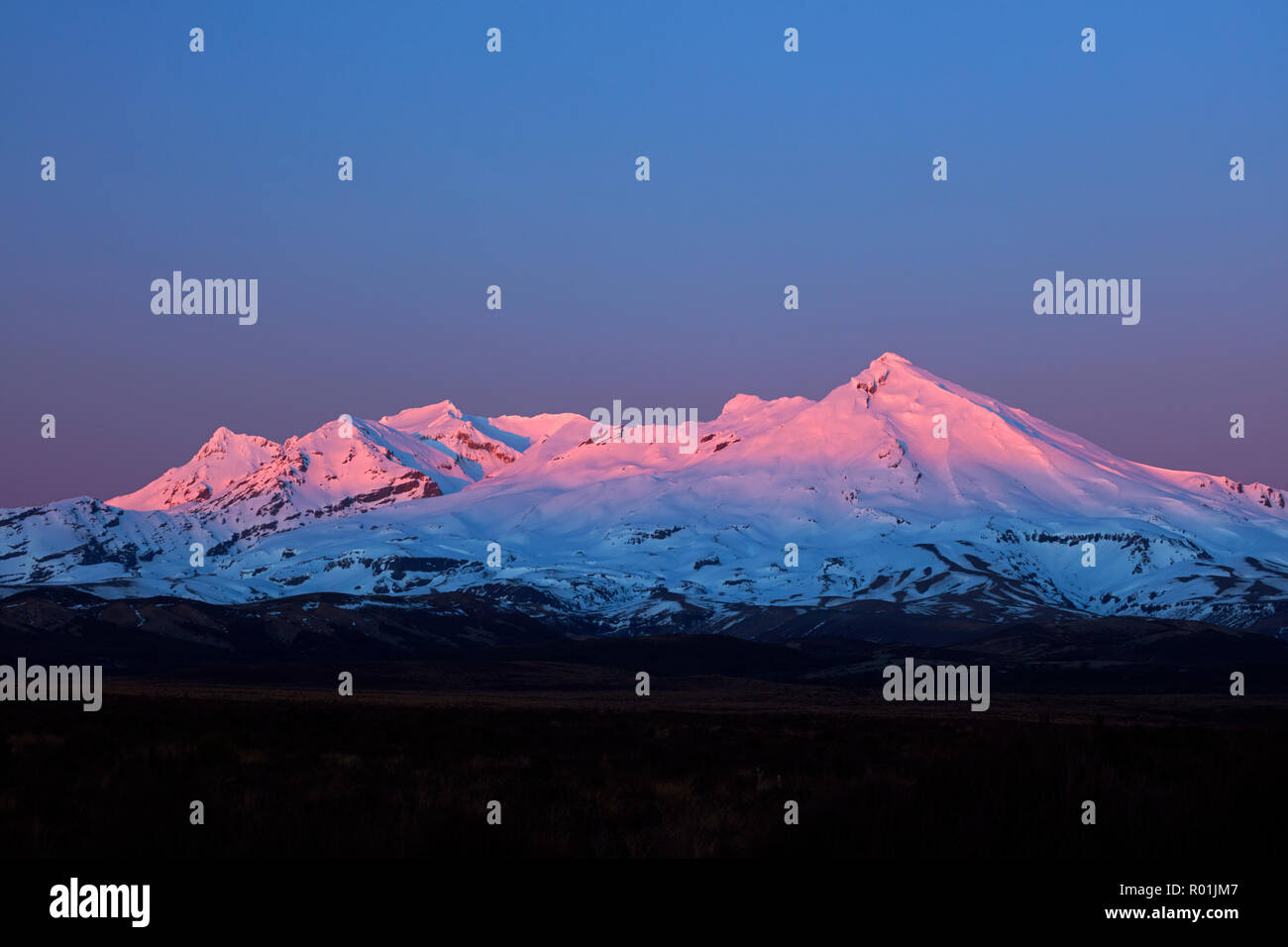 Alpenglow on Mt Ruapehu at dawn, Tongariro National Park, Central Plateau, North Island, New Zealand - Stock Image