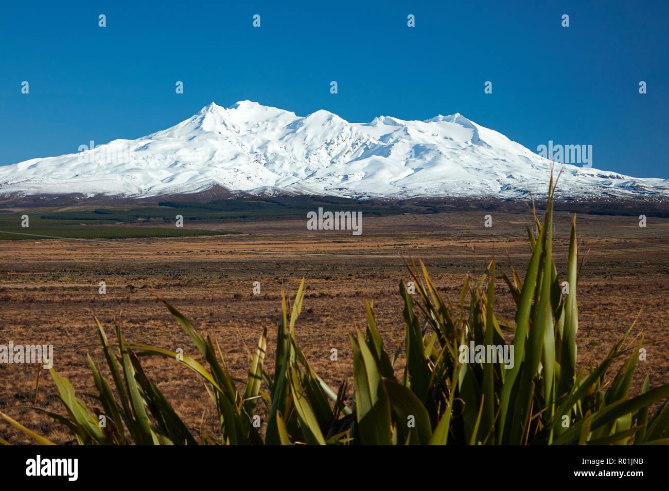 Mt Ruapehu, Rangipo Desert, and flax, Tongariro National Park, Central Plateau, North Island, New Zealand - Stock Image