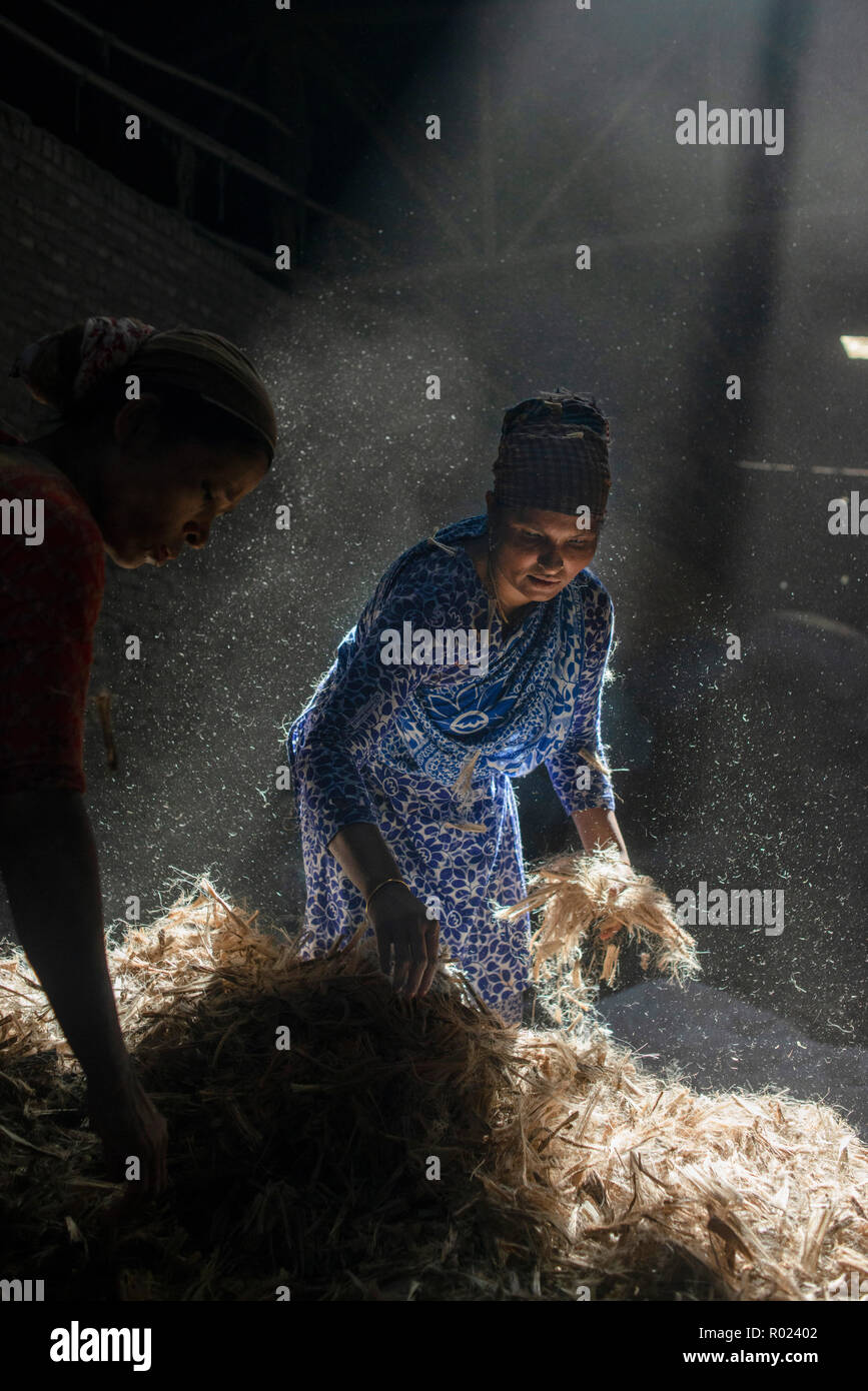 Sun rays enter through the rooftop while Jute mill workers sorting out small pieces of jutes. Bangladesh used to be known for it's Jute. In recent years Bangladesh and many other country considering jute as the new possibilities to replace many daily goods and make bags out of jute to replace plastics. Stock Photo