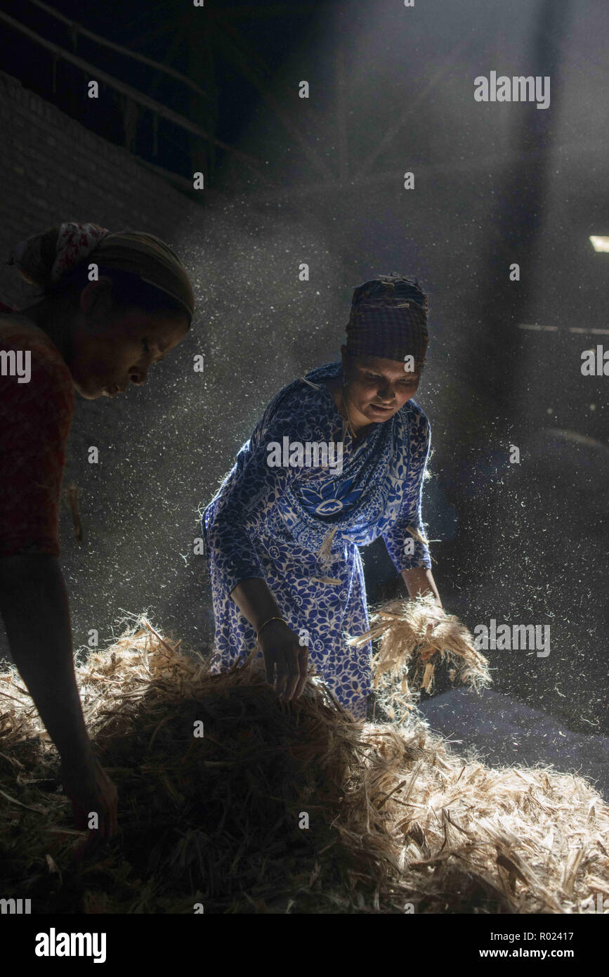 Narayanganj, Bangladesh. 1st Nov, 2018. Sun rays enter through the rooftop while Jute mill workers sorting out small pieces of jutes.Bangladesh used to be known for it's Jute. In recent years Bangladesh and many other country considering jute as the new possibilities to replace many daily goods and make bags out of jute to replace plastics. Credit: Ziaul Haque Oisharjh/SOPA Images/ZUMA Wire/Alamy Live News Stock Photo