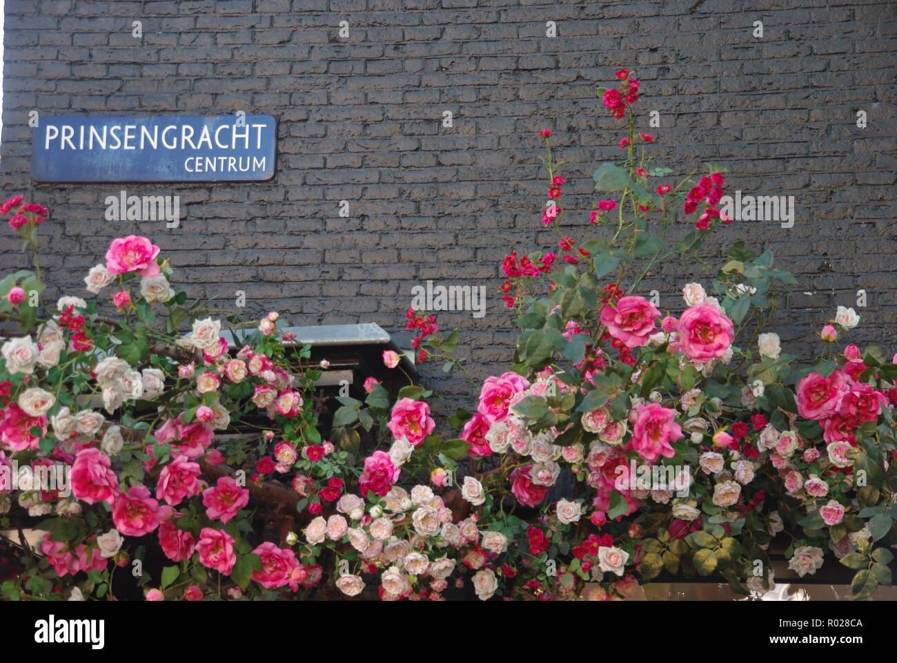 Roses on Prinsengracht Centrum, Amsterdam - Stock Image