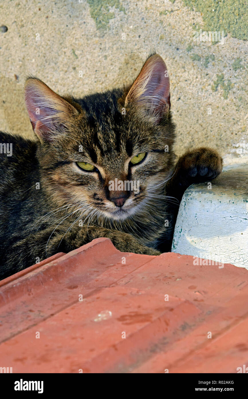 Portrait of dark grey tabby kitten sitting on ceramic tiles with its paw kept on a sill Stock Photo