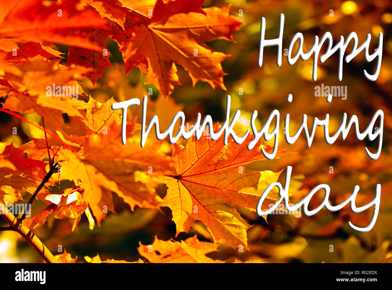 Happy Thanksgiving Greeting, autumn background of colorfull  leaves - Stock Image