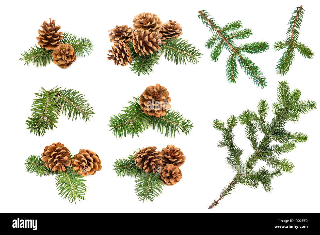 Set of christmas pine cones and branches isolated on a white background - Stock Image