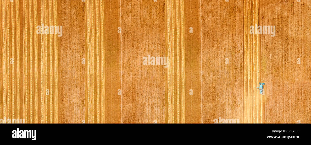 Ripe wheat field aerial view - Stock Image