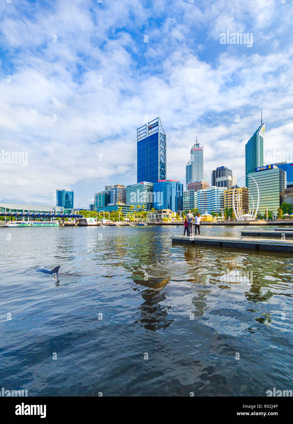 An Indopacific bottlenose dolphin (Tursiops aduncus) at Elizabeth Quay. Perth, Australia - Stock Image