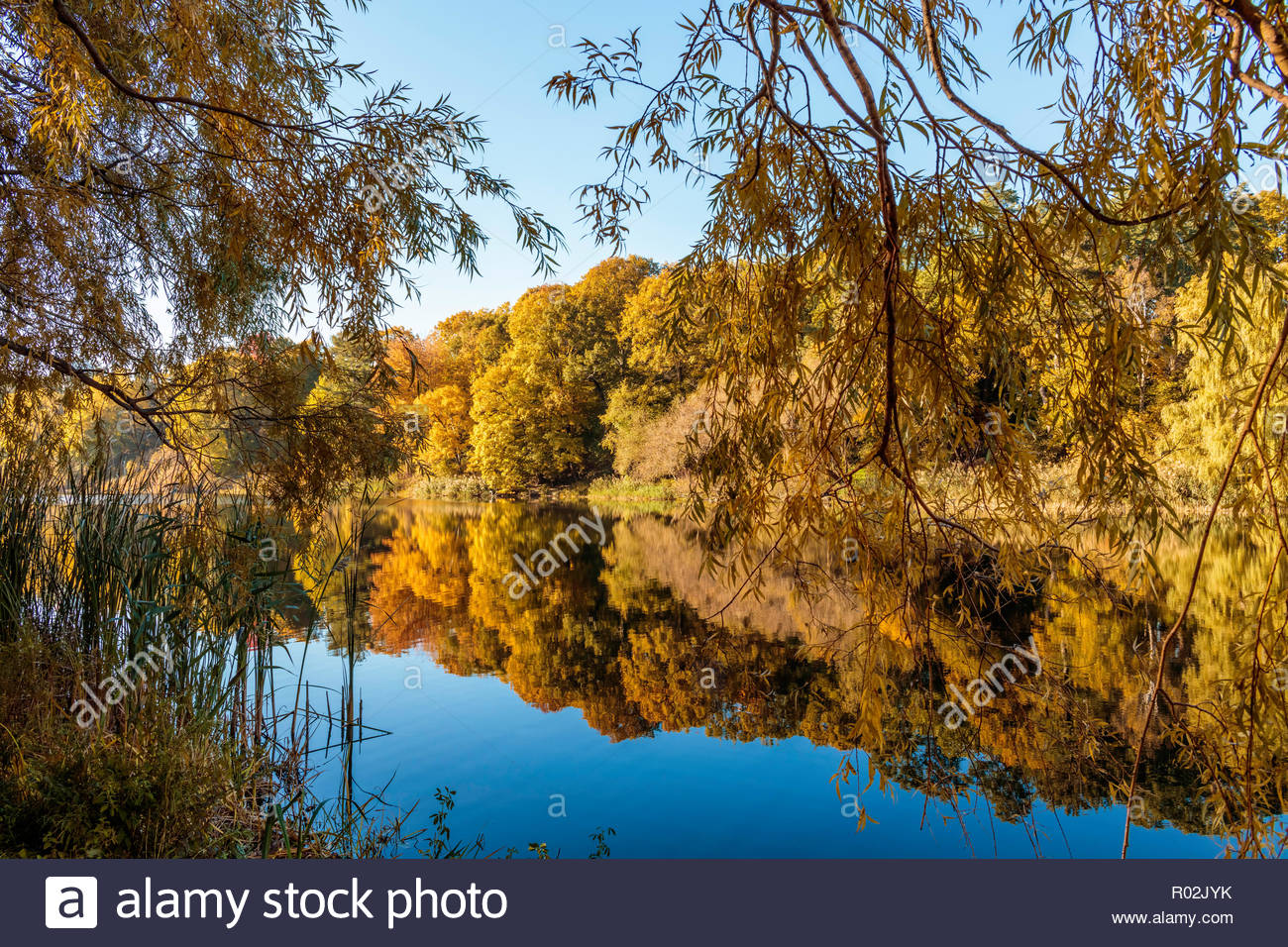 Autumn reflections of deciduous trees in still water of Grenadier Pond in fall in High Park in Toronto Ontario Canada - Stock Image