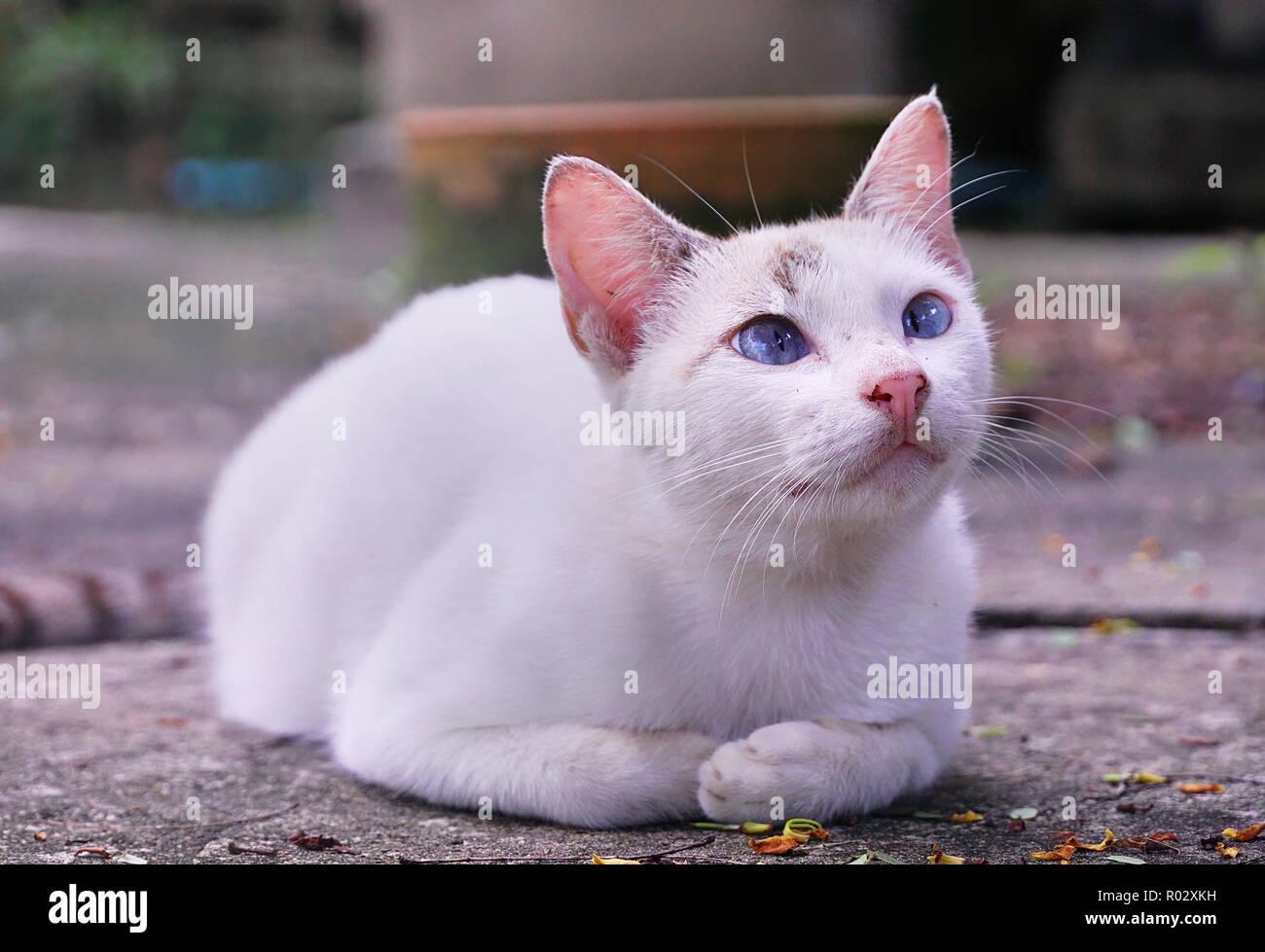 Portrait white cute kitten sit on ground - Stock Image