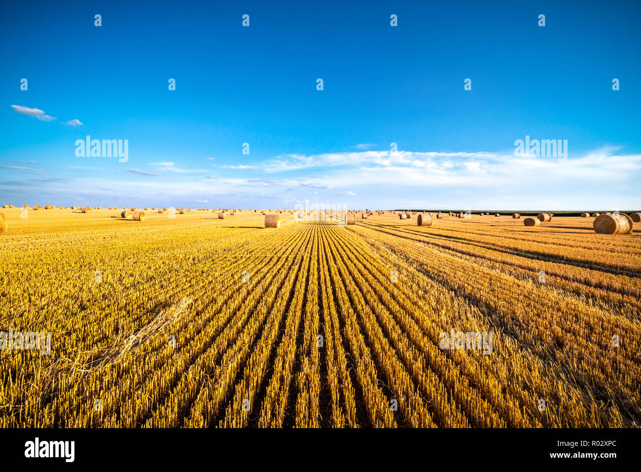 Field with straw bales, summer field, Germany | Feld mit Strohballen, Sommerfeld - Stock Image