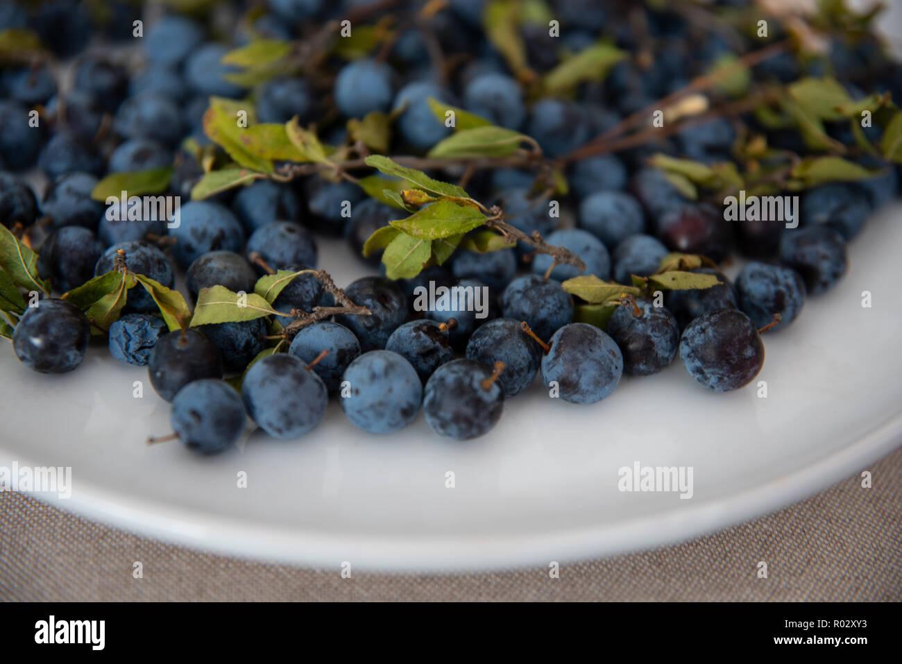 Mirtilli - Stock Image
