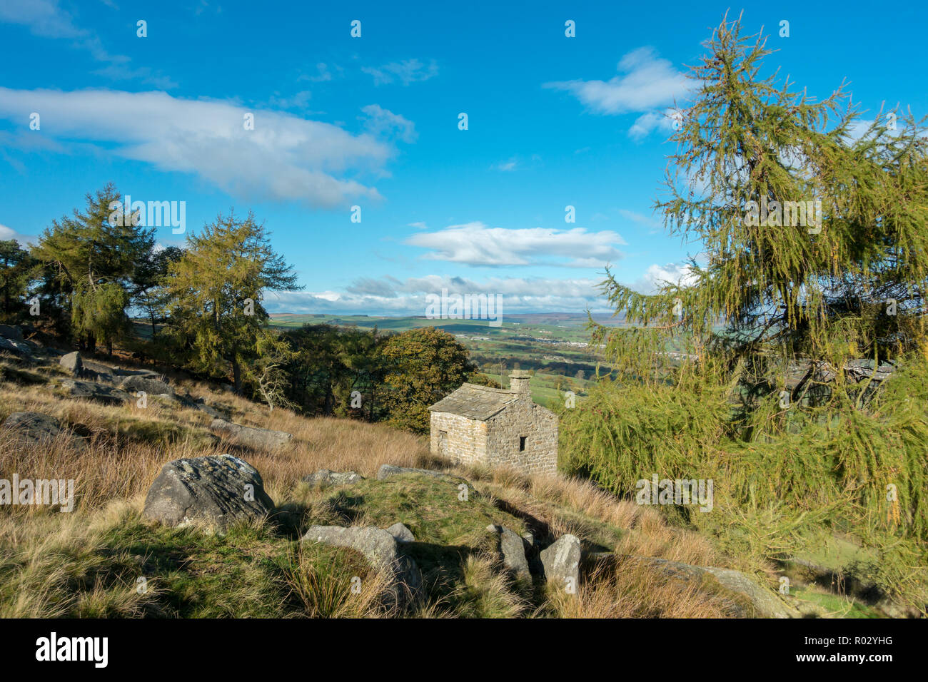The shepherd's hut and larch trees in autumn - Unusual views of Ilkley moor, West Yorkshire, UK - Stock Image