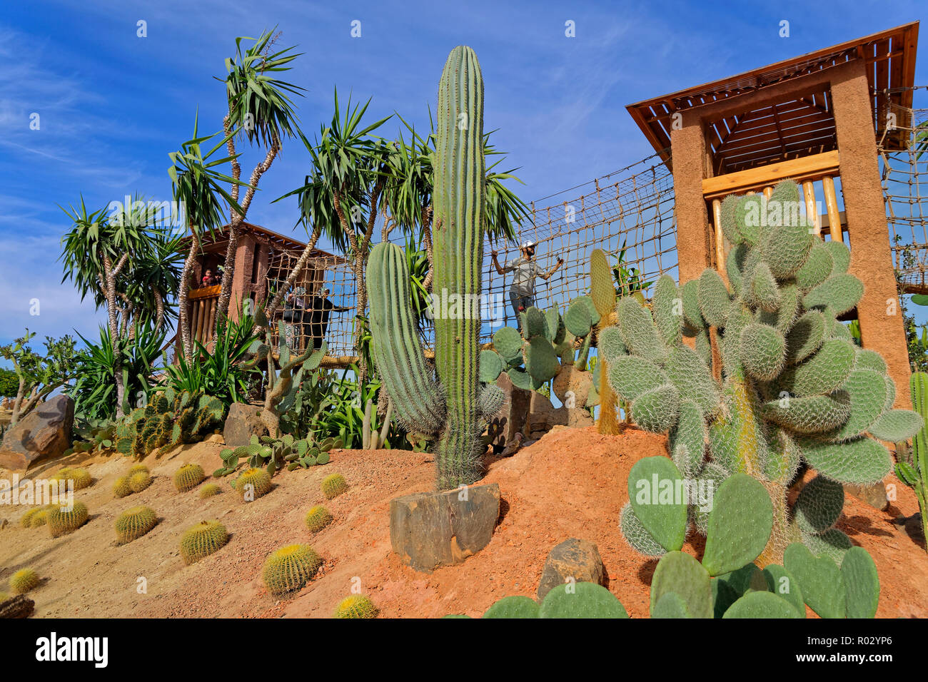 Cactus garden feature and aerial walkway at Croco Park, Agadir, Souss-Massa Province,  Southern Morocco, North West Africa. Stock Photo