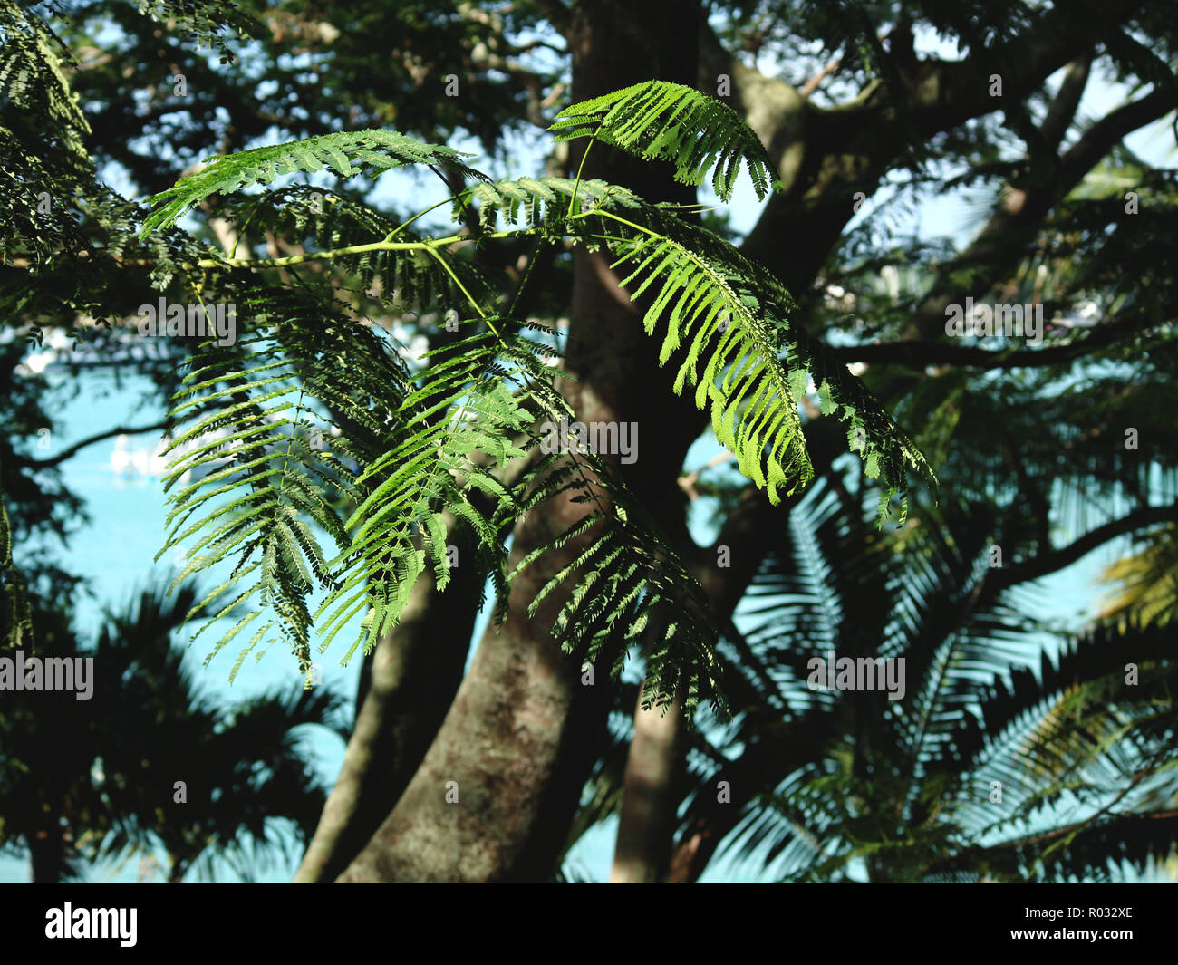 Palm Trees Growing Outdoors - Stock Image