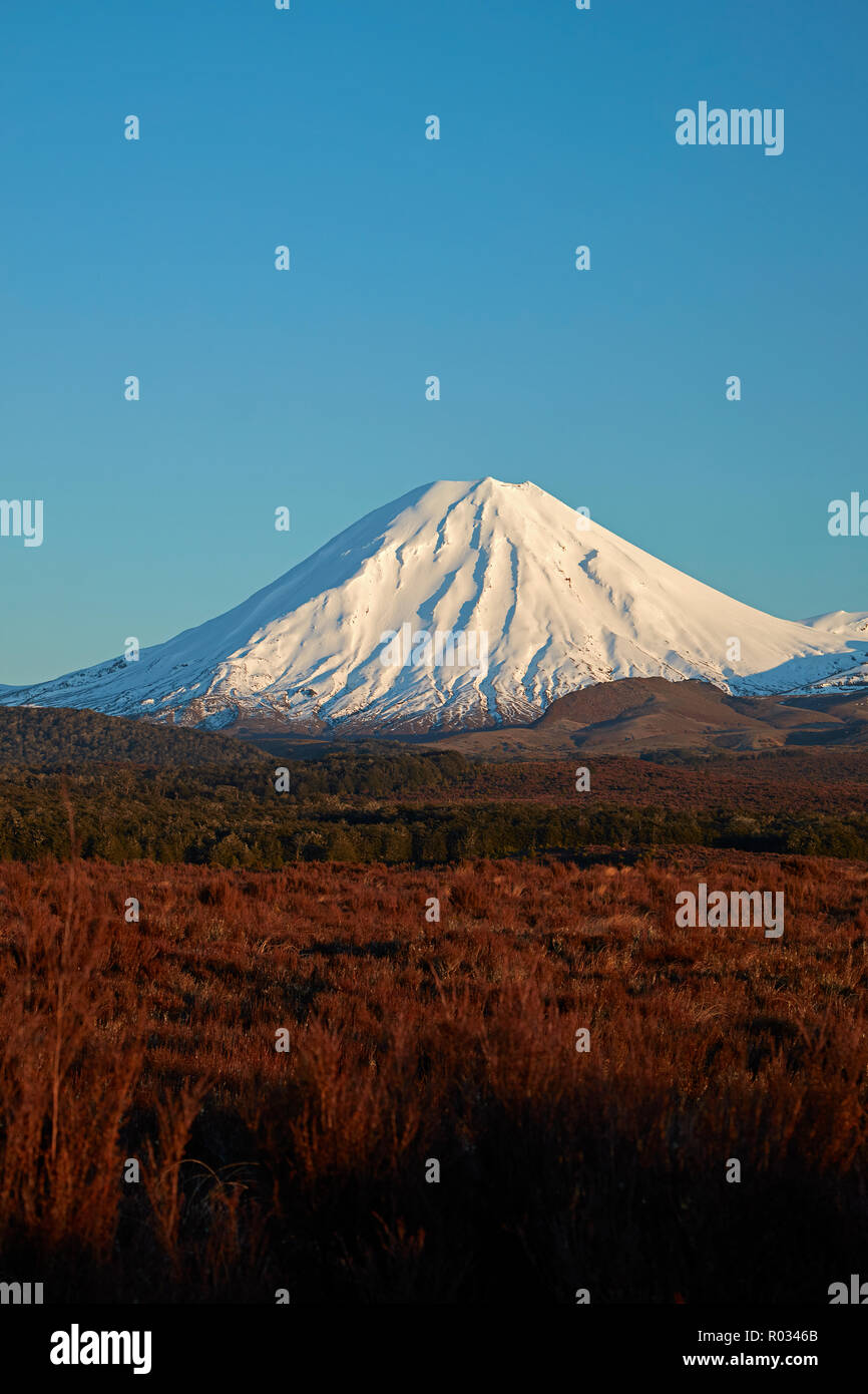 First light on Mt Ngauruhoe, Tongariro National Park, Central Plateau, North Island, New Zealand - Stock Image