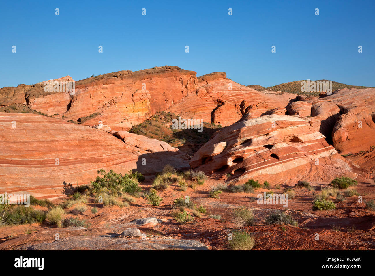 NV00068-00...NEVADA - Contrasting layers of sandstone near The Fire Wave  in the Valley of Fire State Park. - Stock Image