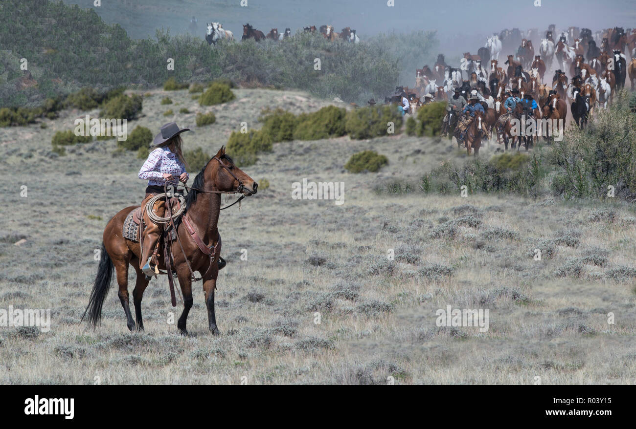 Cowgirl wrangler ranch hand riding bay horse anxiously waiting to help herd hundreds of horses on annual Great American Horse Drive across sagebrush - Stock Image