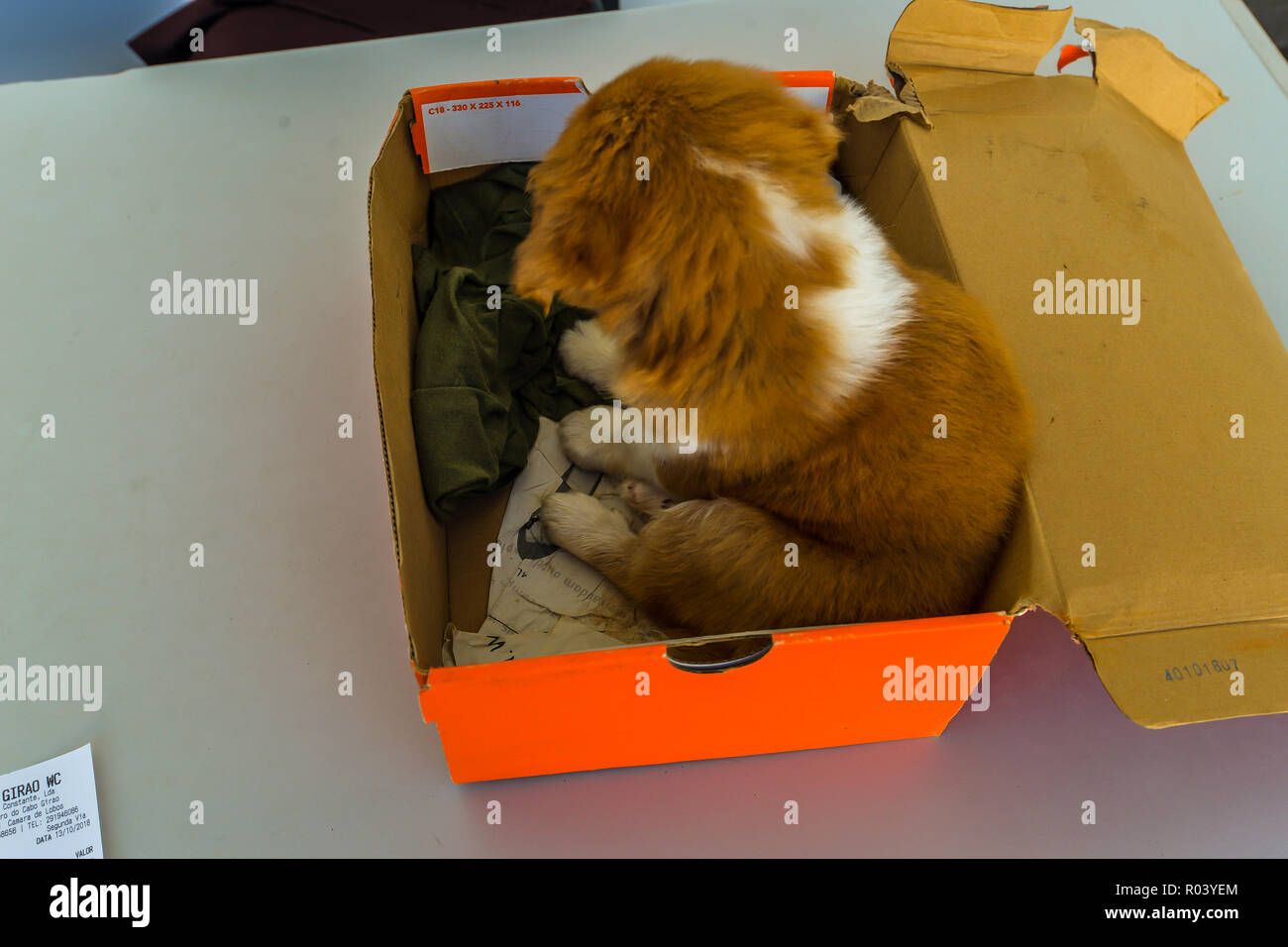 A young puppy sitting in a box - Stock Image
