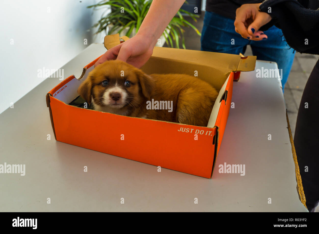 Maderia/Portugal - 10/12/18 - A young puppy sitting in a box - Stock Image