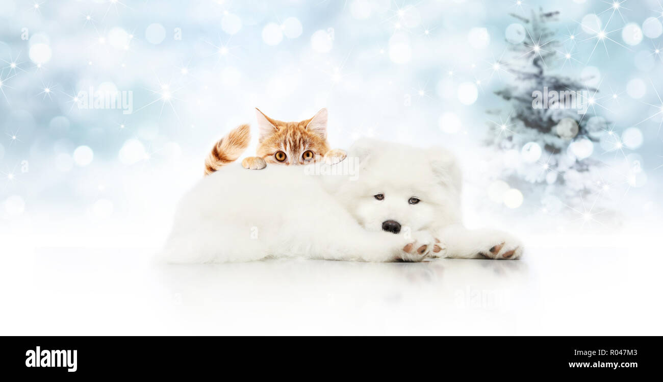 Merry Christmas Signboard Or Gift Card For Pet Shop White Dog And Ginger Cat Pets Isolated On Blurred Xmas Lights And Tree Copy Space Blank Backgrou Stock Photo Alamy