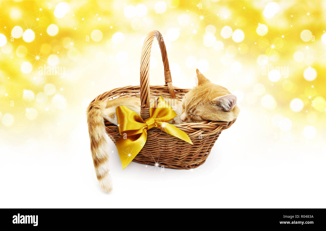 greeting or gift card, ginger cat inside wicker basket with golden ribbon bow, isolated on Christmas bright gold lights background - Stock Image