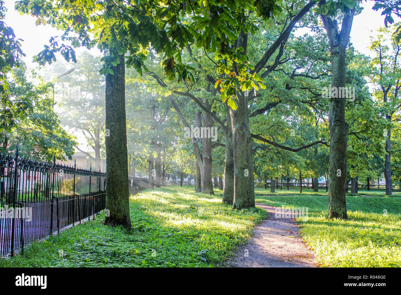 Summer park path. Green trees, stone paths. Walk in the fresh air. Summer background screensaver Stock Photo