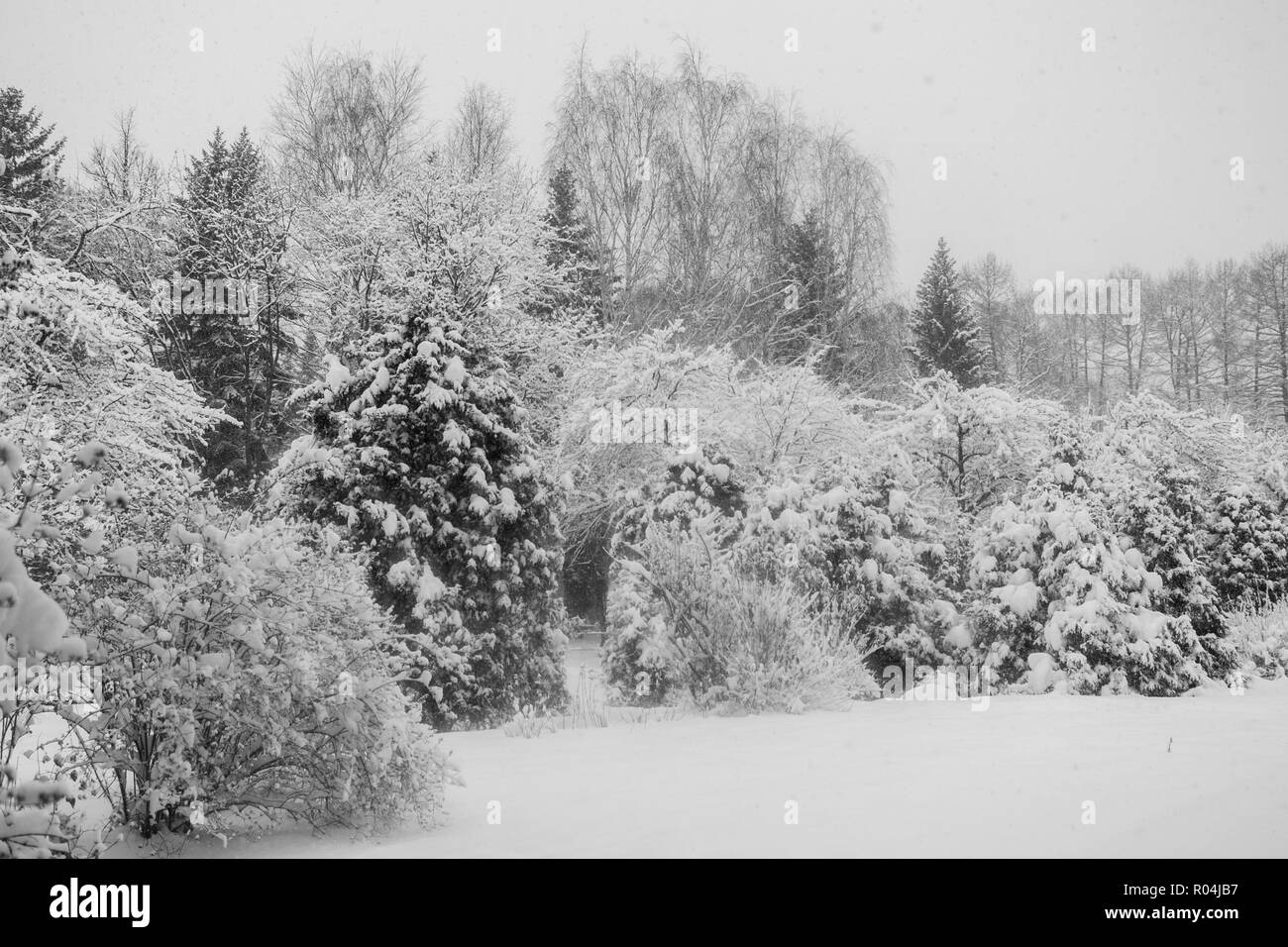 View of snow-covered winter urban park.  - Stock Image
