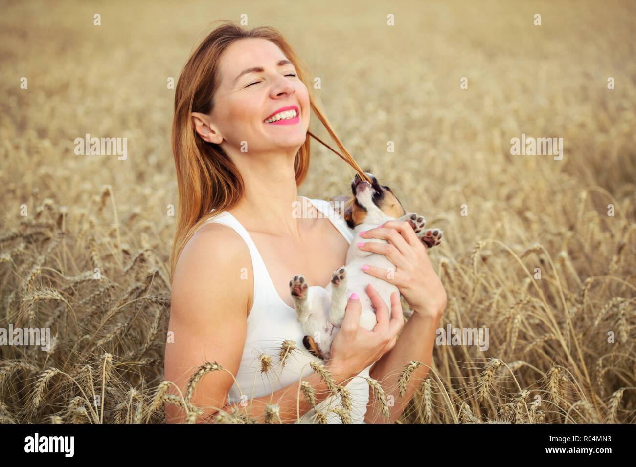 Woman with Jack Russell terrier puppy on her hands, wheat field in background, dog is restless and chewing the hair instead of posing. - Stock Image
