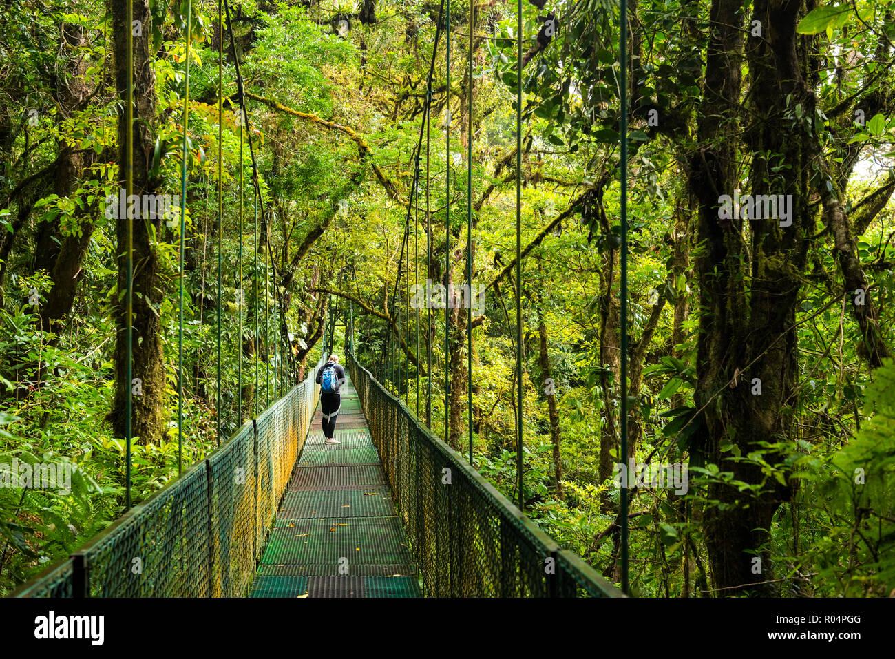 Selvatura Treetop hanging bridges, Monteverde Cloud Forest Reserve, Puntarenas, Costa Rica, Central America - Stock Image