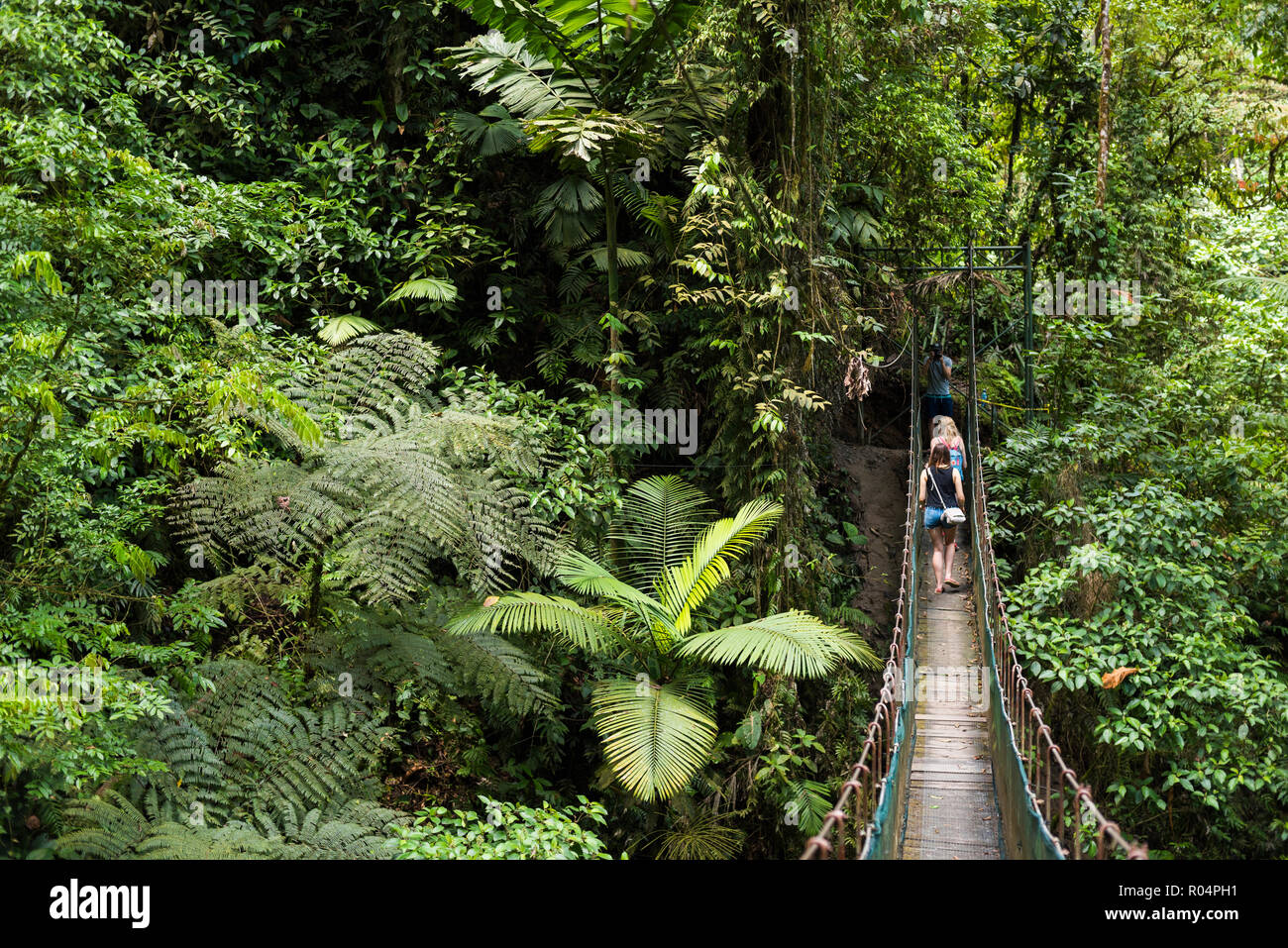 Rainforest on La Fortuna Waterfall hike, Alajuela Province, Costa Rica, Central America - Stock Image