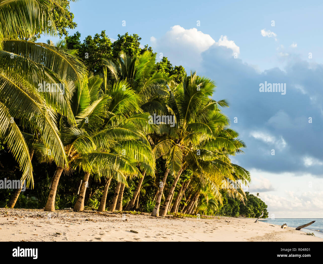 Coconut trees line the beach on the Island of Alofi, French Territory of Wallis and Futuna Islands, South Pacific Islands, Pacific - Stock Image