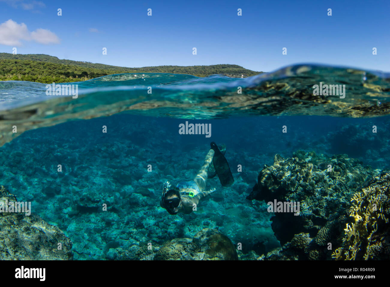 Snorkeling the pristine reefs on the remote Island of Alofi in The French Territory of Wallis and Futuna Islands, South Pacific Islands, Pacific - Stock Image
