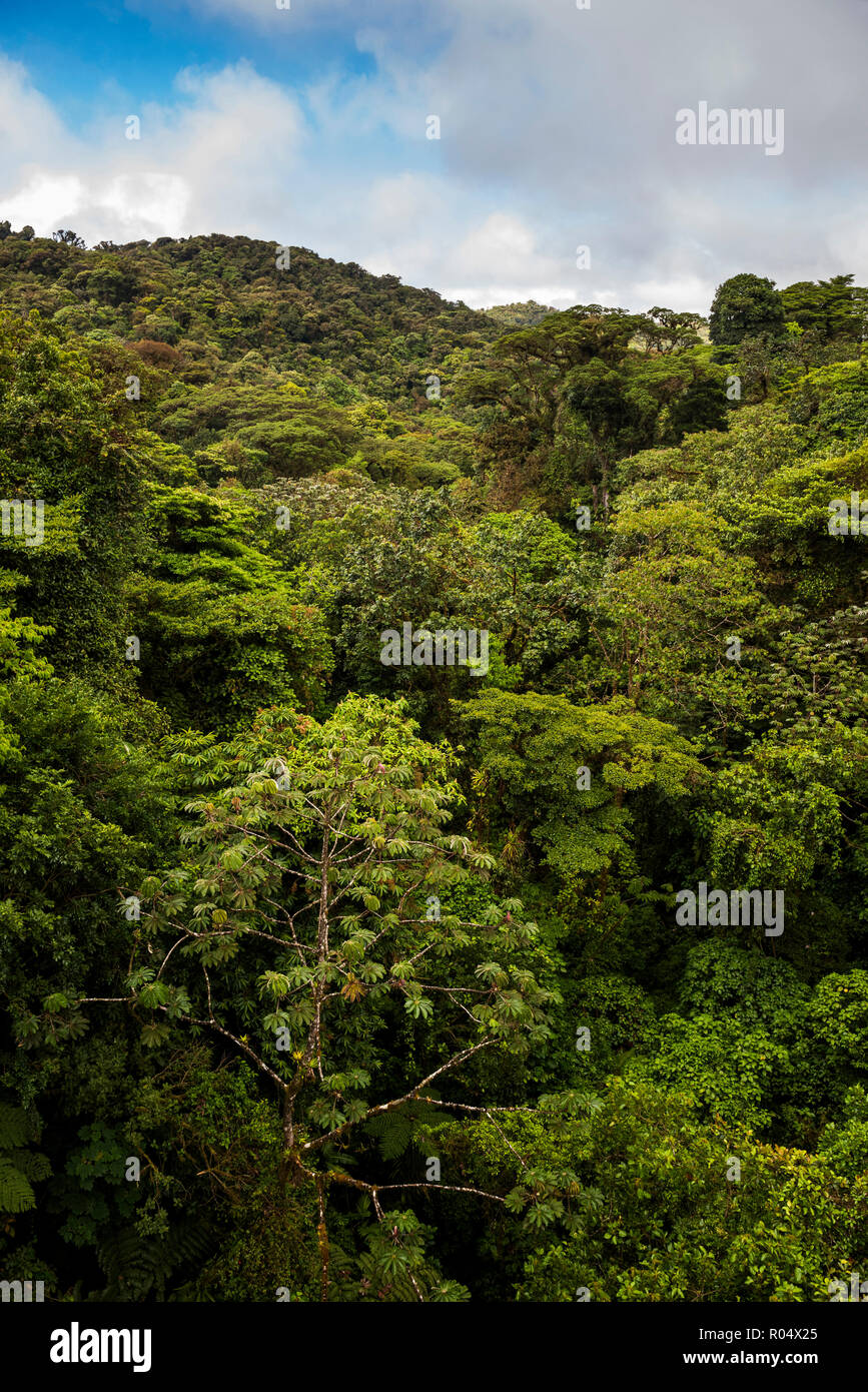 Monteverde Cloud Forest Reserve, seen from Selvatura Treetop hanging bridges, Costa Rica, Central America - Stock Image