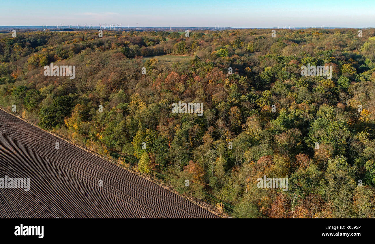 Reitwein, Germany. 31st Oct, 2018. The Reitweiner Sporn (aerial photograph with a drone). The Reitweiner Sporn is also known as Reitweiner Nase and is a distinctive wooded mountain range that extends far into the Oderbruch. Credit: Patrick Pleul/dpa-Zentralbild/ZB/dpa/Alamy Live News Stock Photo