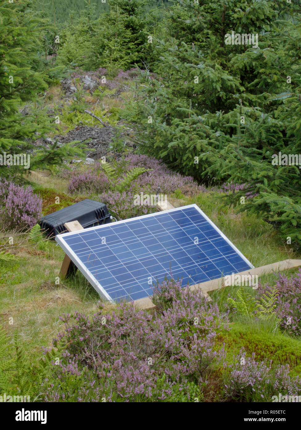 Mobile Solar Panel Generating Off Grid Electricity in a Forest, UK - Stock Image