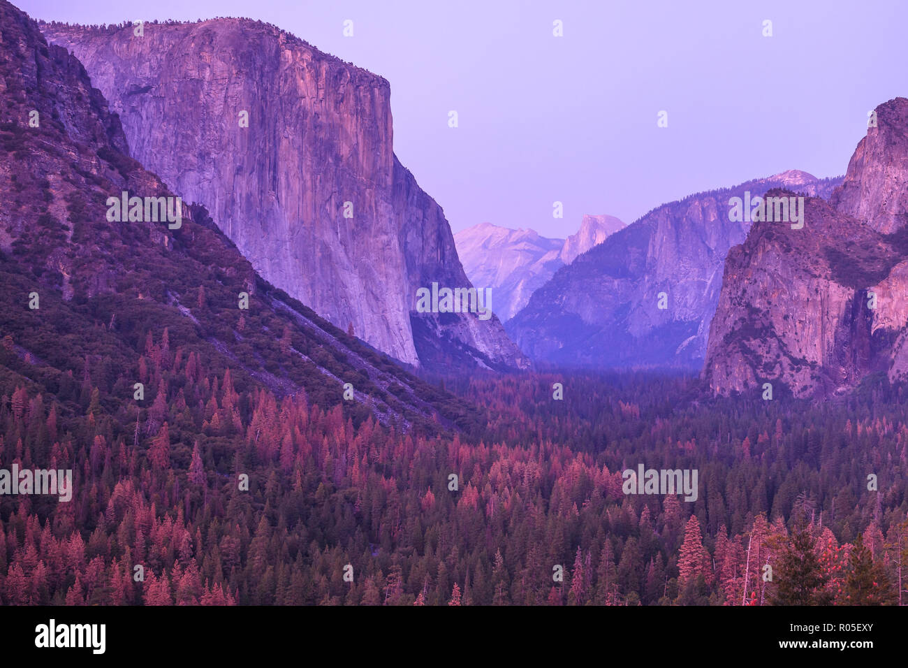 Tunnel View overlook Magenta sunset in Yosemite National Park. Close up on the popular El Capitan and Half Dome during a pink violet sunset in California, United States. - Stock Image