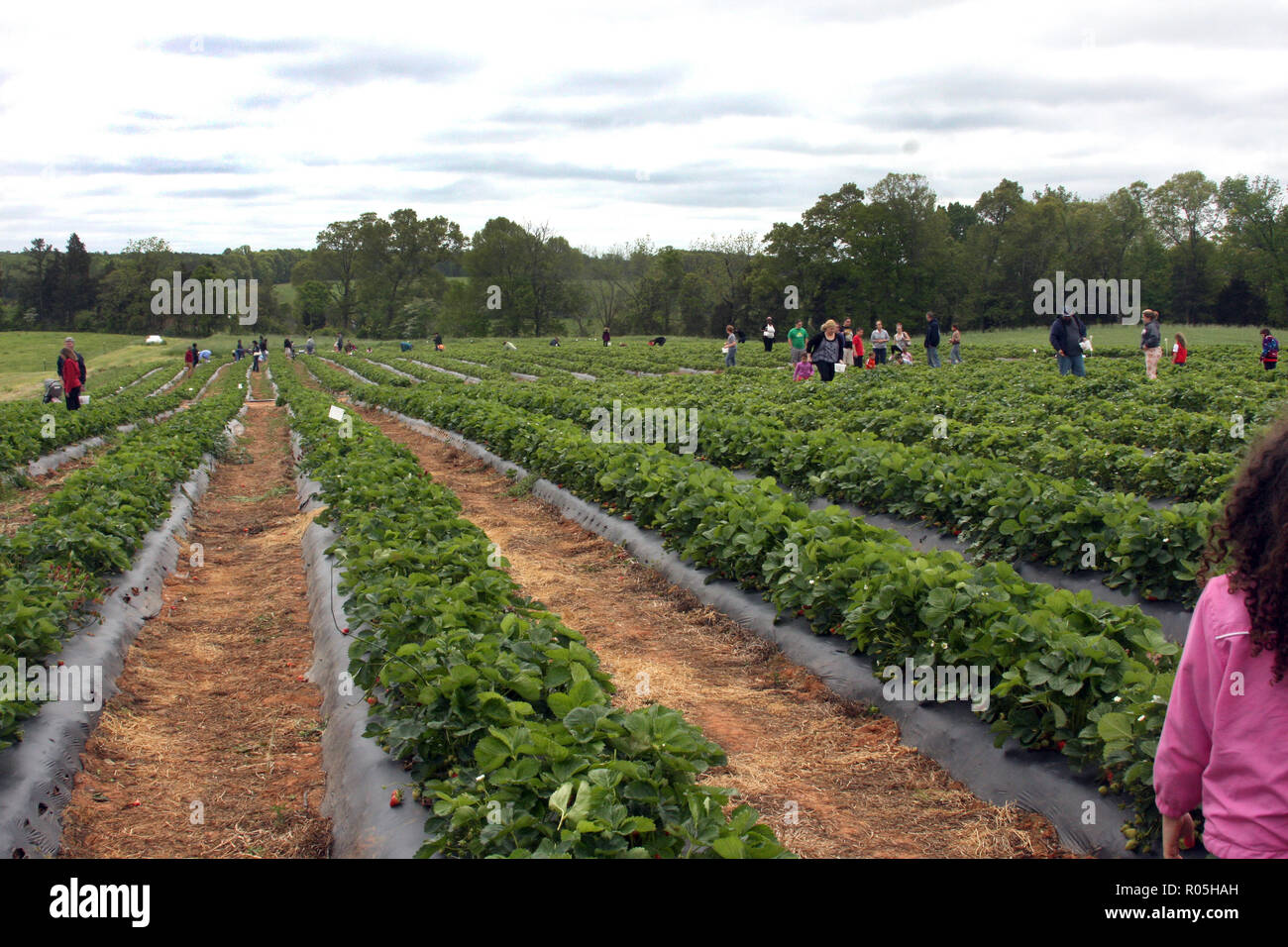 Yoders Stock Photos & Yoders Stock Images - Alamy