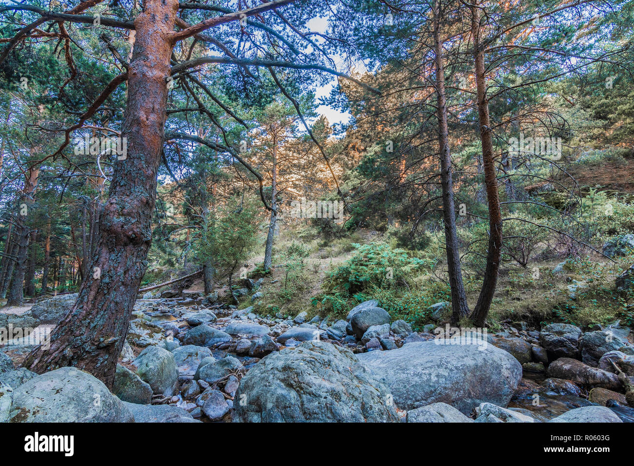 Mountain slope with rocks and pine forest in the Sierra de Guadarrama. Madrid Spain Stock Photo