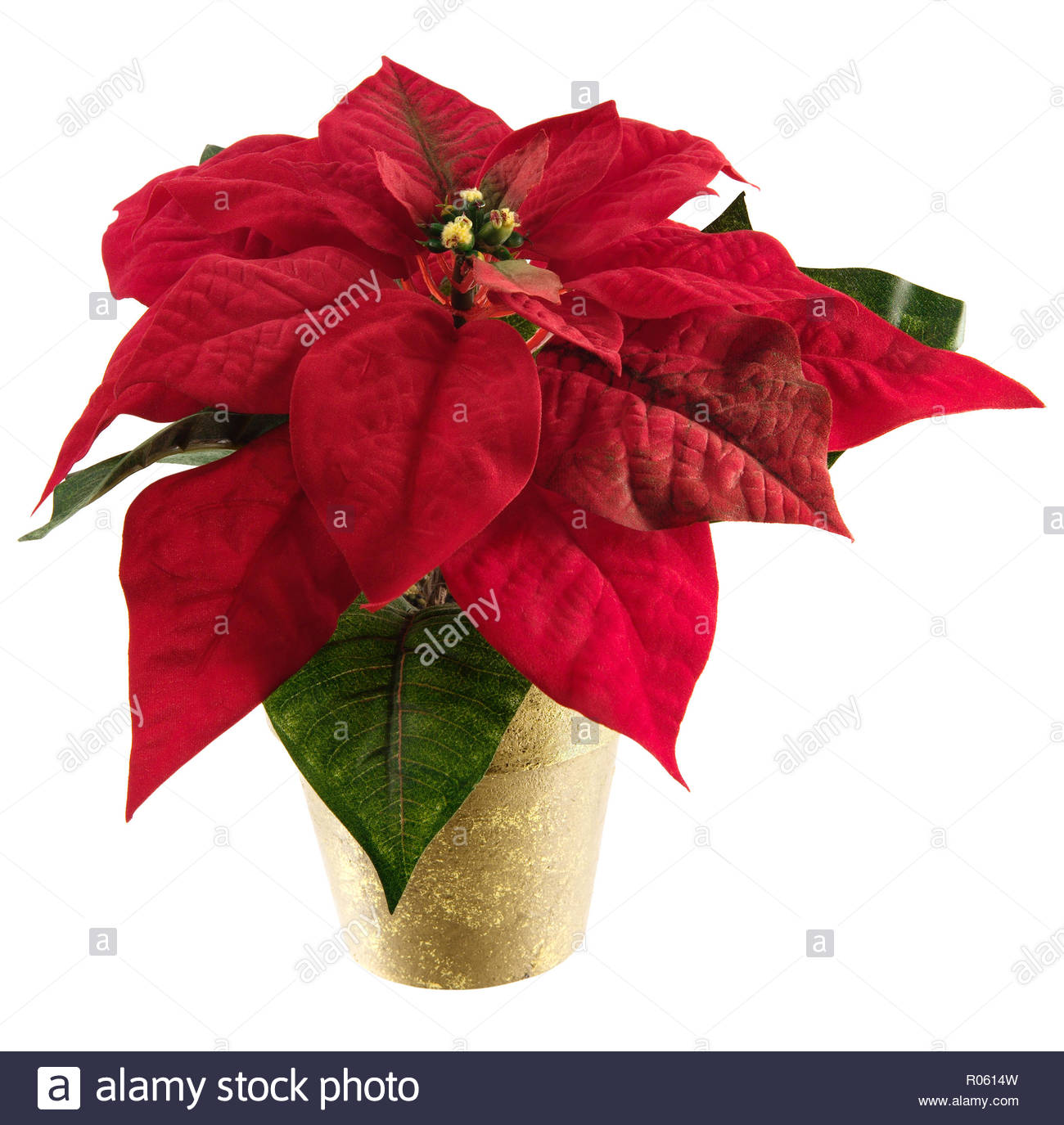 Silk Floral Poinsettia For Holiday And Christmas Themes Stock Photo