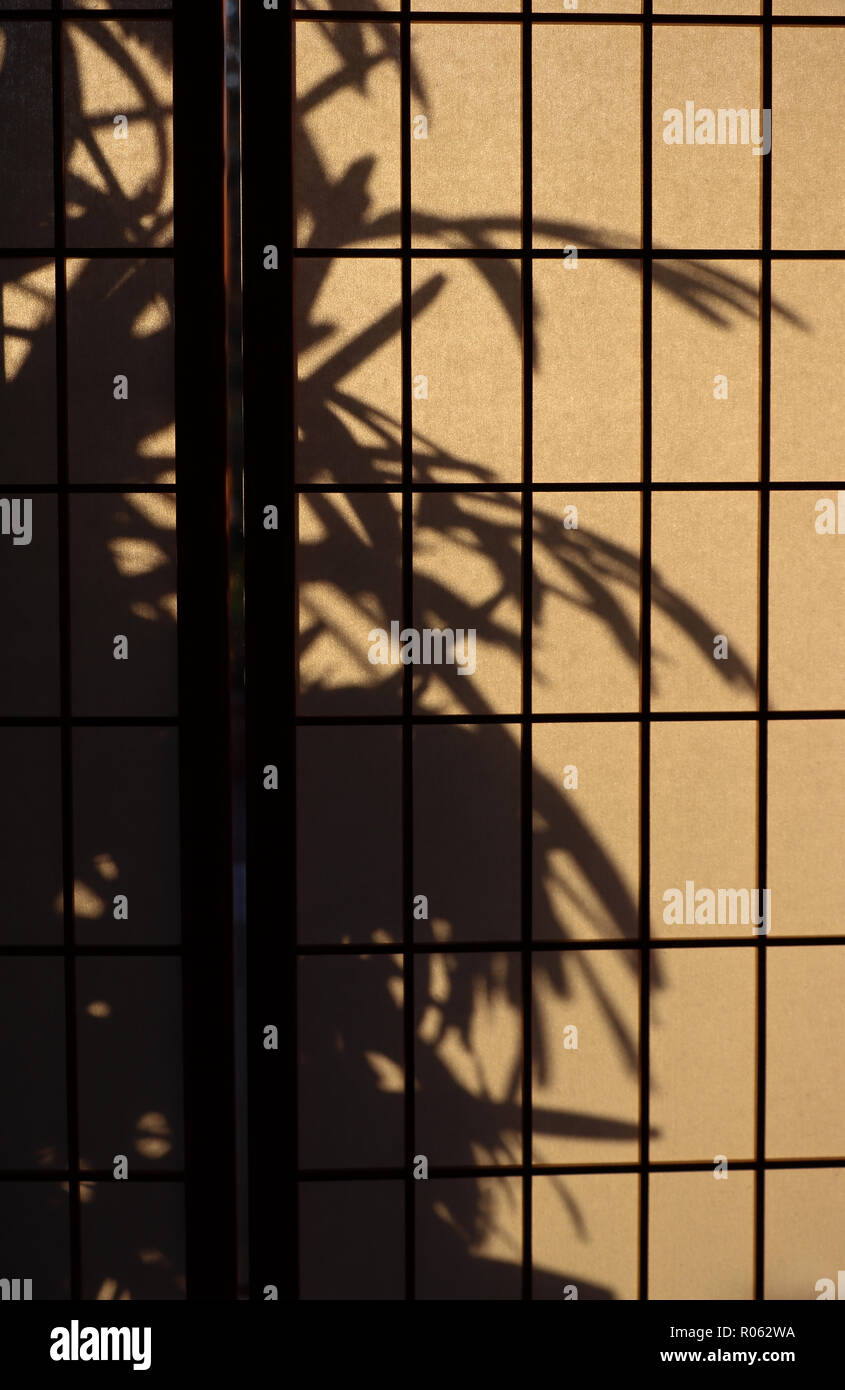 Rectangular gridwork on aJapanese rice paper or shoji screen used for privacy or room divide. It lets diffuse light in:a lady palm silhouetted outside - Stock Image